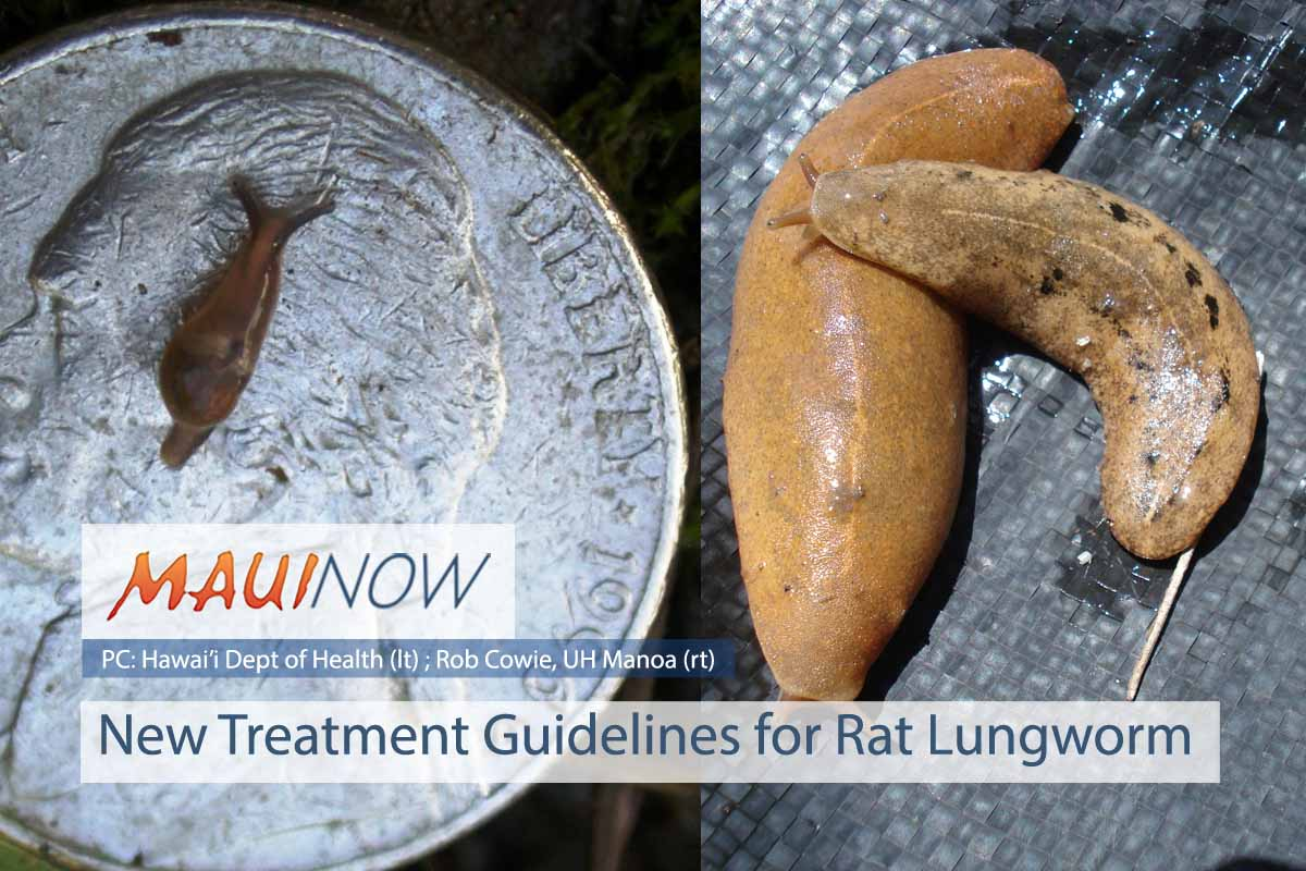 New Treatment Guidelines for Rat Lungworm
