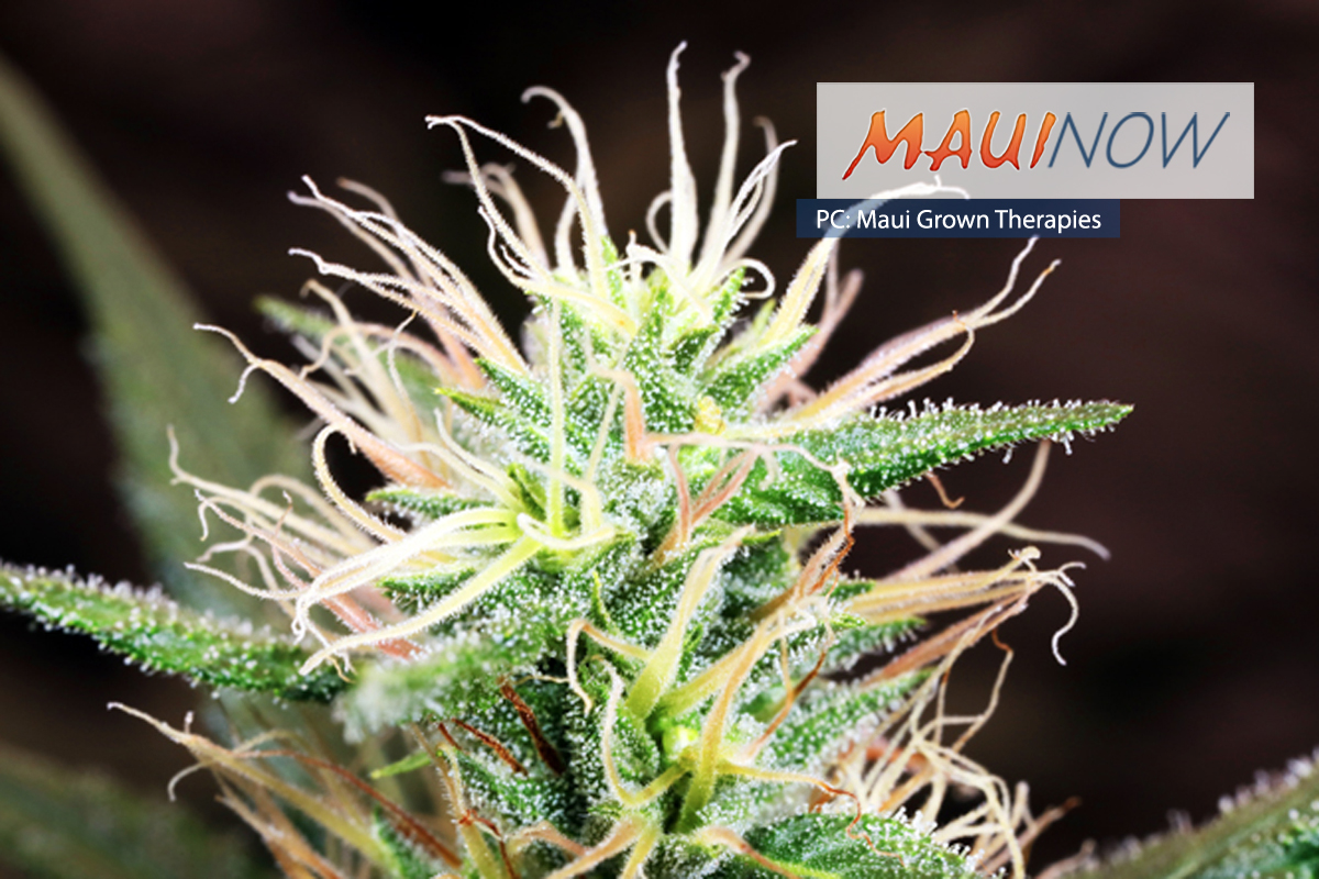 Maui Grown Therapies Announces Release of Kona Gold