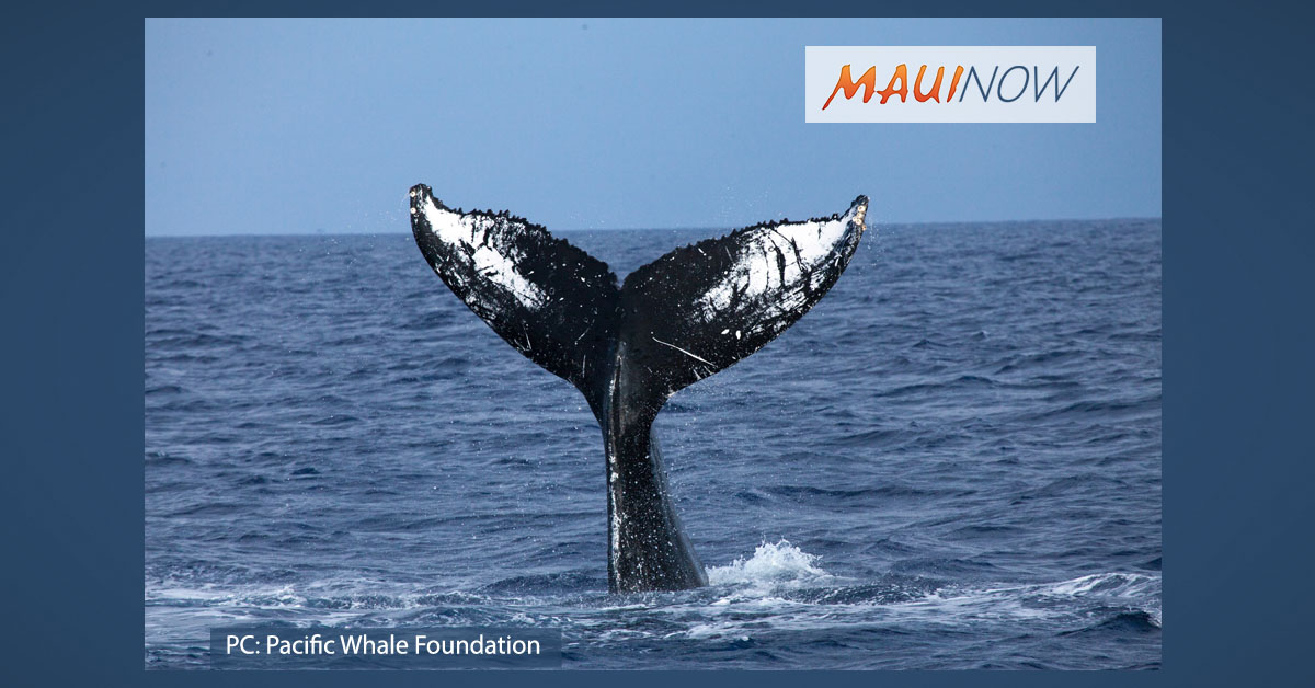 The Whales Are Back! PWF Reports its First Sighting of Season