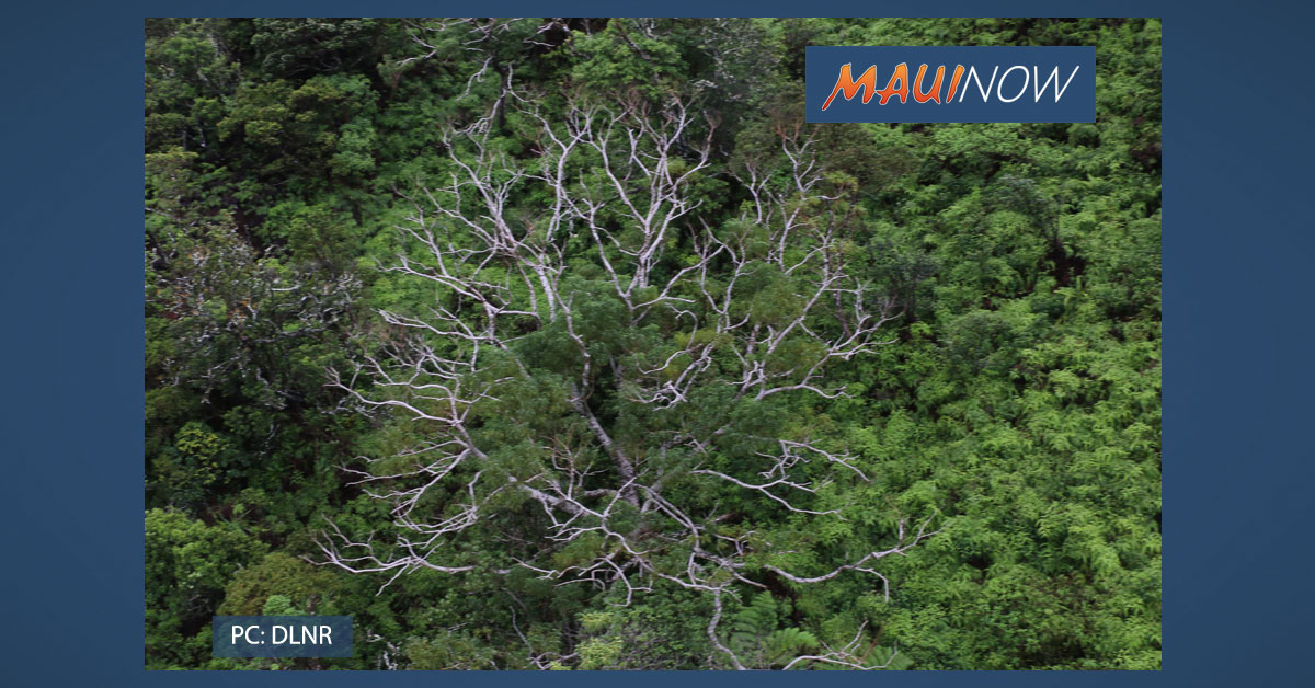 Rapid 'Ōhi'a Death Detected at Kalōpā State Recreation Area