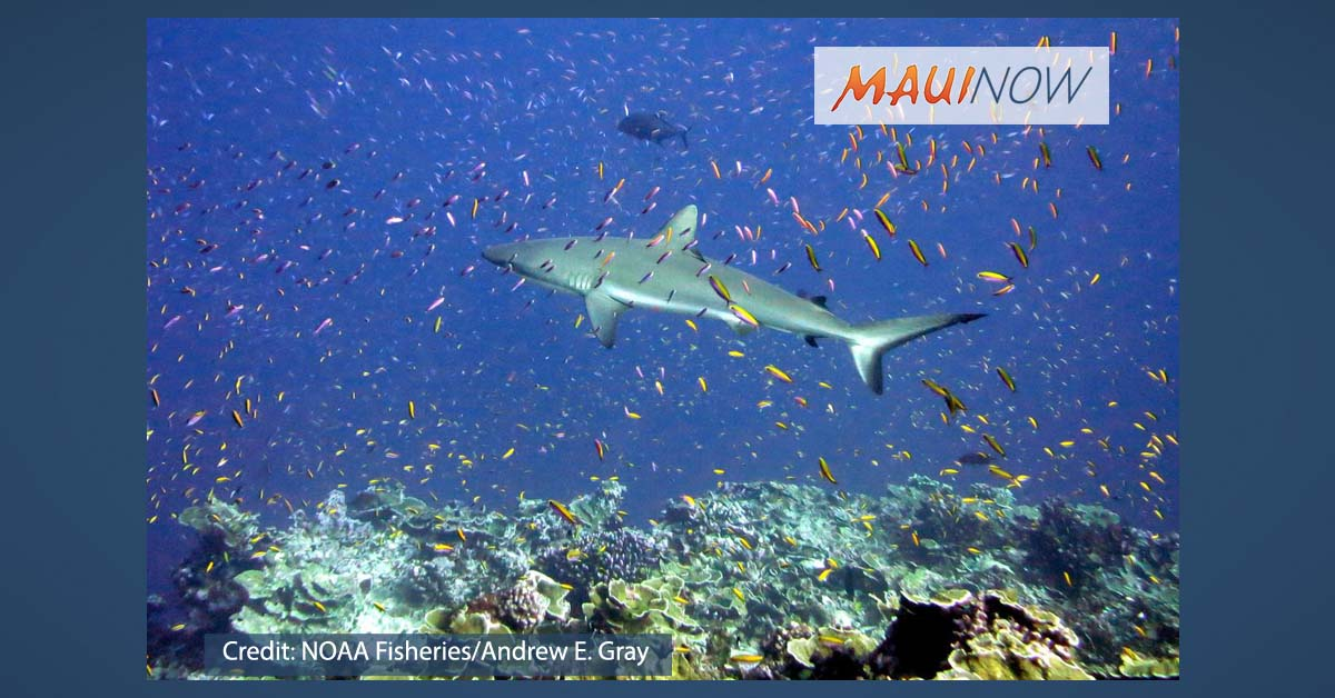 UH Professor Contributes to Report on Coral Reefs and Climate Change