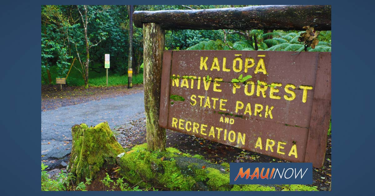 Work to Address Rapid 'Ōhi'a Death at Kalōpā on Hawai'i Island