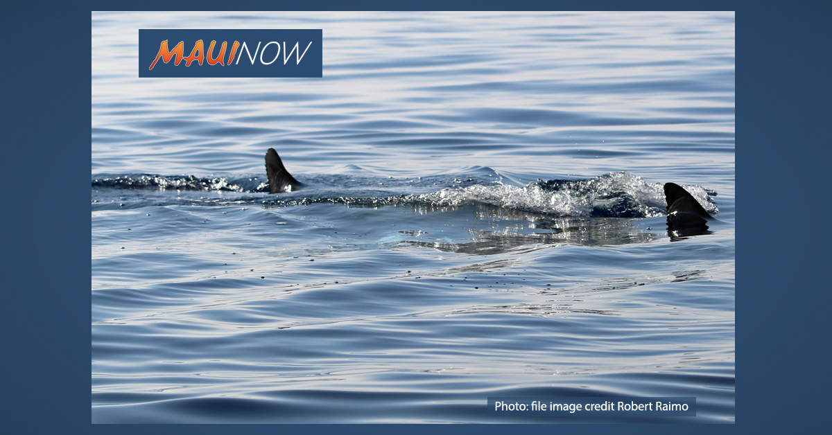 Commercial Tour Crewman Charged with Shark Chumming