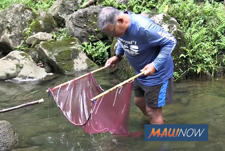 Expert to Discuss Status of Maui's Waterways and Species