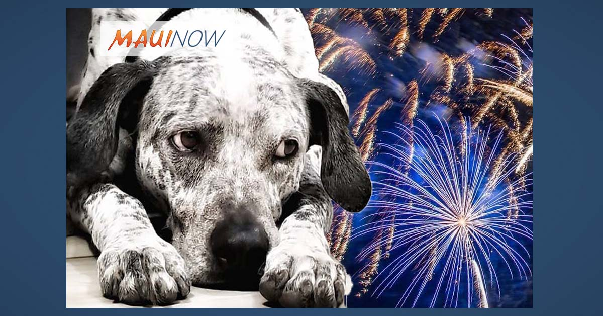 Donation Drive For Animals Affected by Fireworks