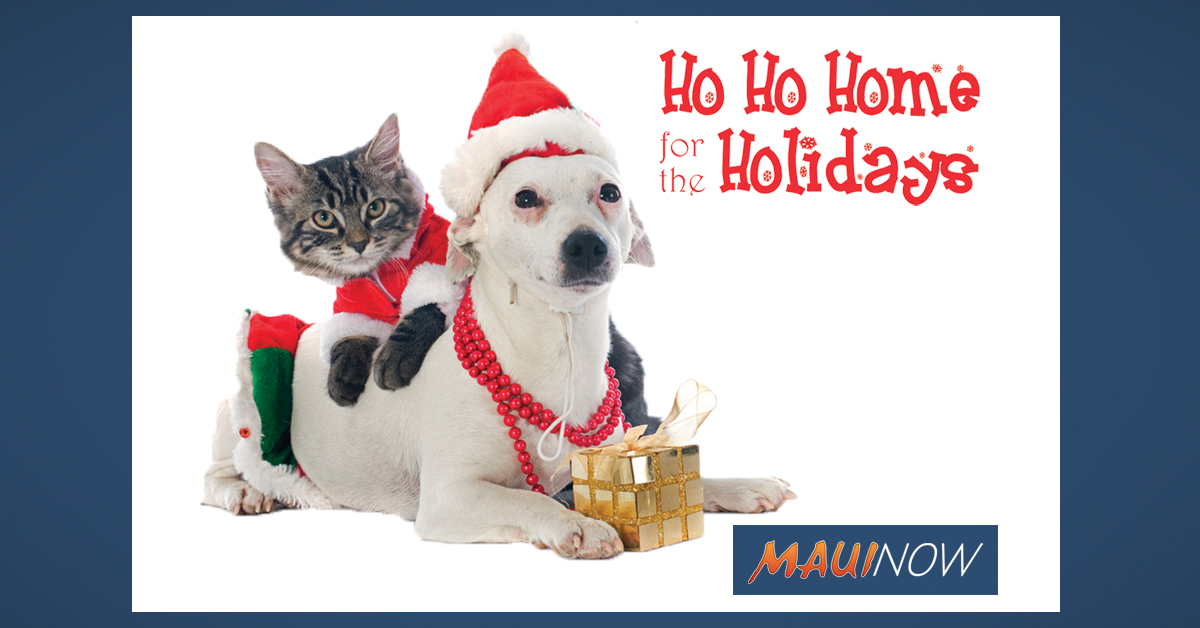 Maui Humane Society Offers Christmas Day Delivery