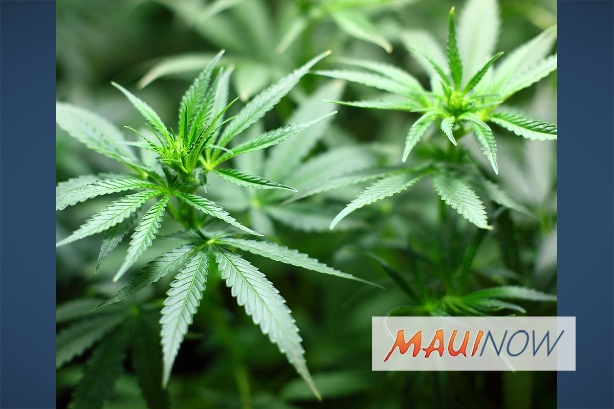 Lau Ola LLC Becomes Big Island Grown Dispensaries