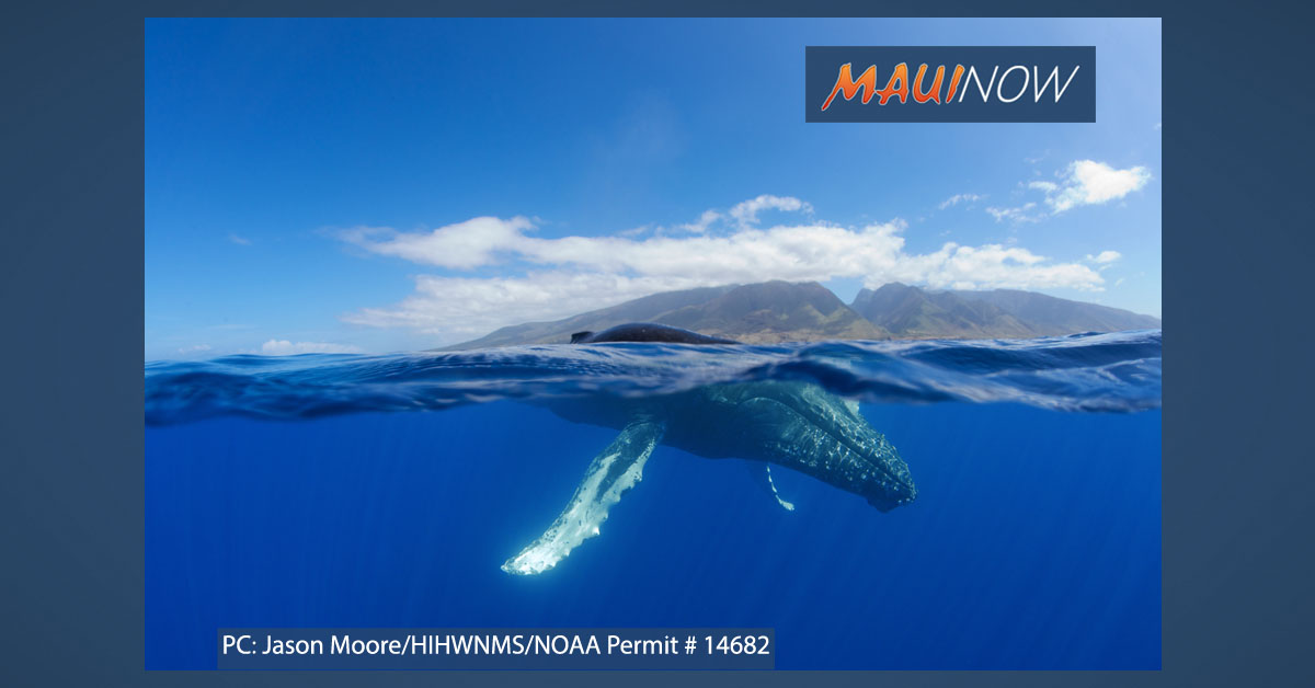 Humpback Sighting Marks Start of Whale Season