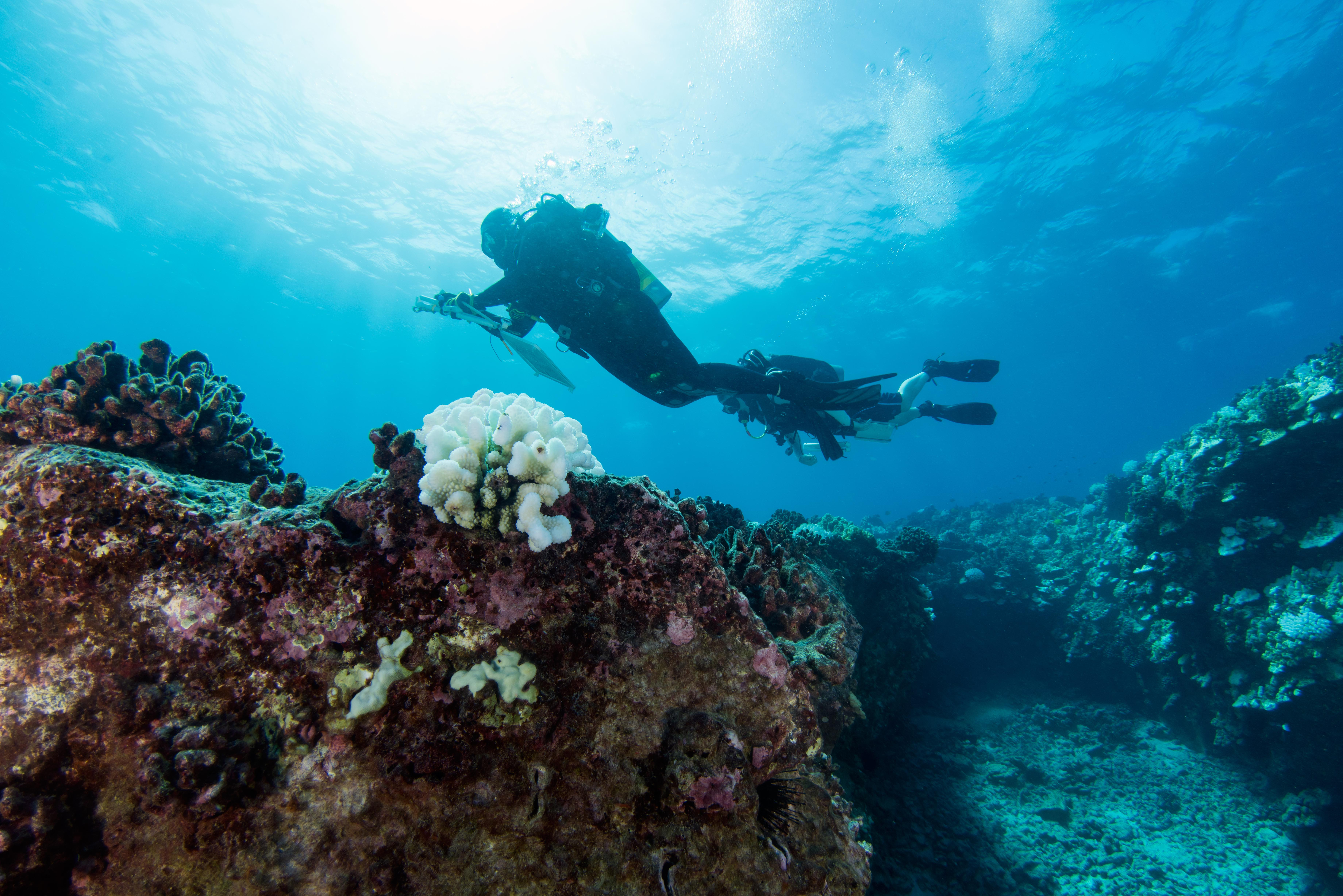 Coral Reefs in West Hawaiʽi Showing Signs of Recovery
