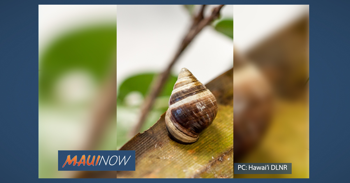 The Last Known Land Snail Of Its Kind Dies