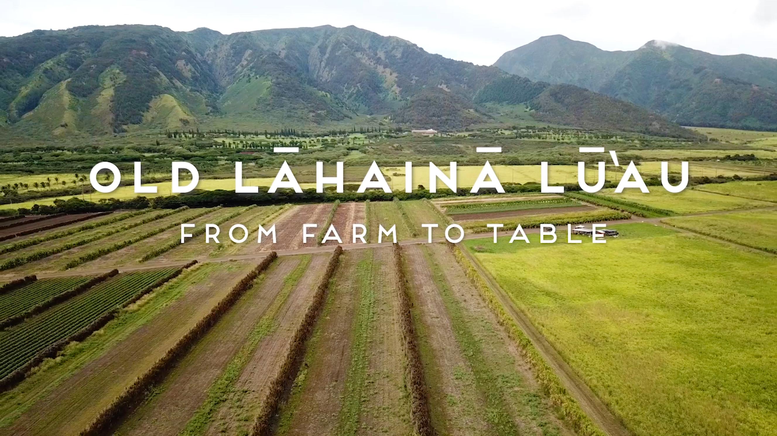 Hoaloha Farms in The Business Spotlight