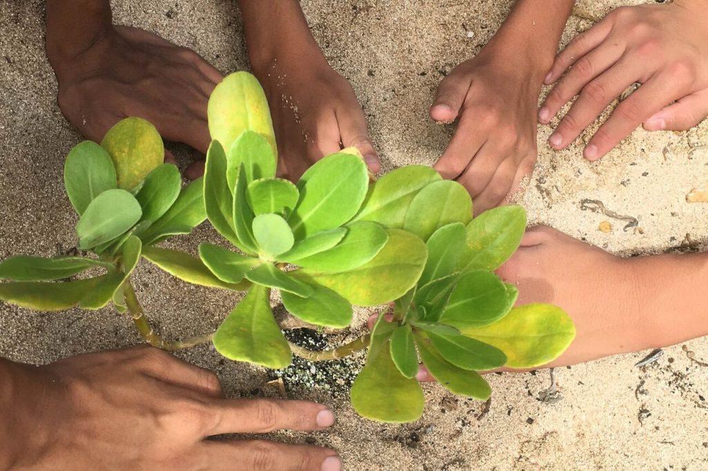 Maui Now: Paid Conservation Leadership Program Seeks Candidates