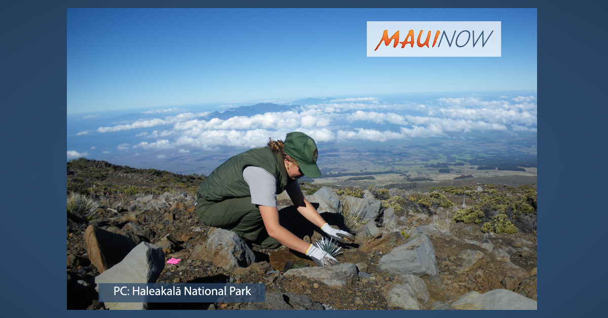 Haleakalā Joins in Largest Single-Day Volunteer Effort on Public Lands this Saturday