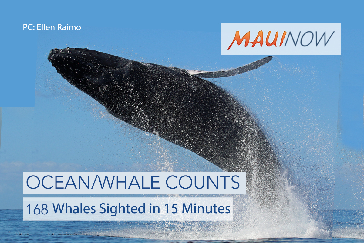 168 Whales Sighted in 15 Minutes During Whale Counts