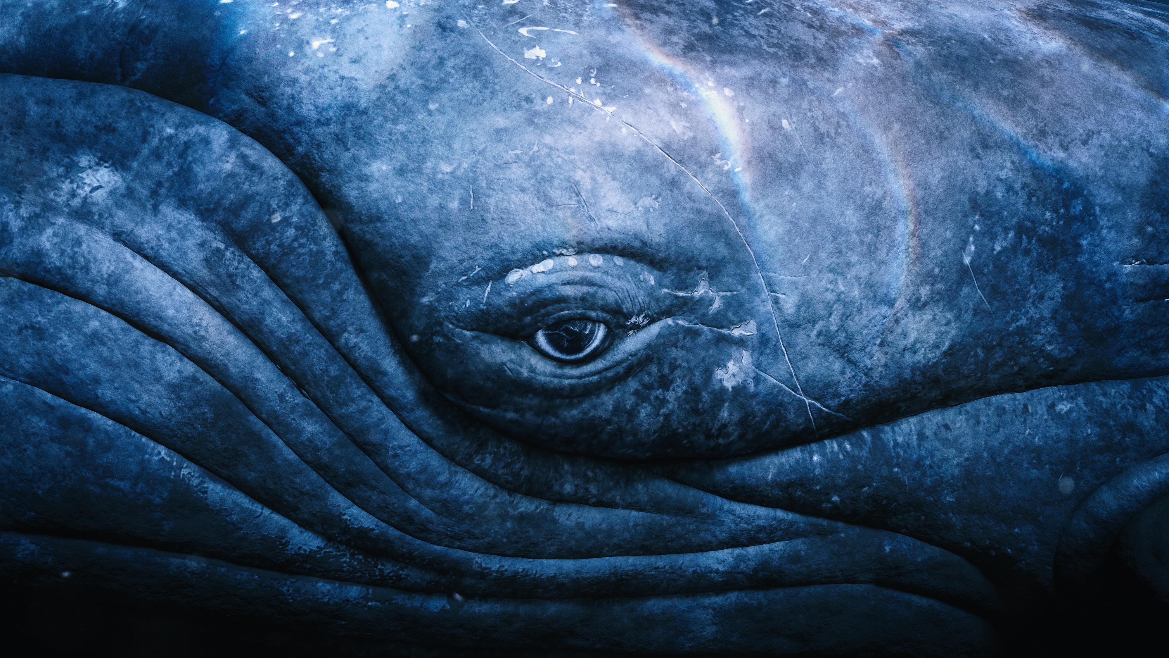 """Humpbacks of Hawai'i"" Sphere Exhibit to Open Soon"