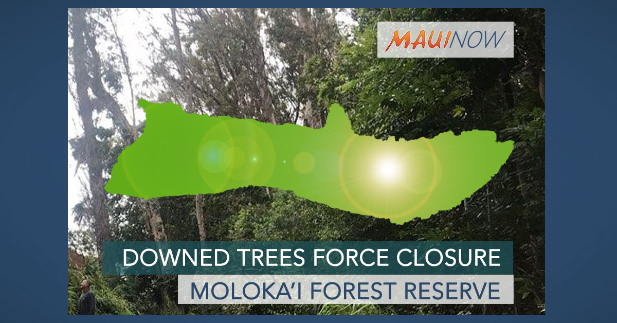 Downed Trees Force Closure of Moloka'i Forest Reserve