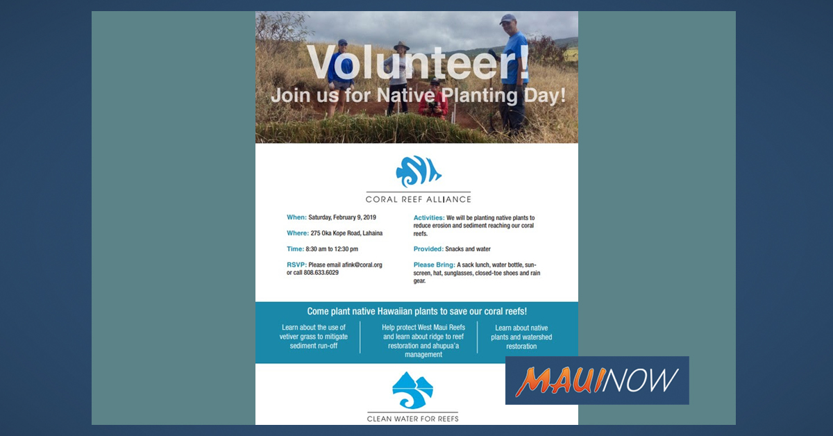 Volunteer Native Planting Day in West Maui