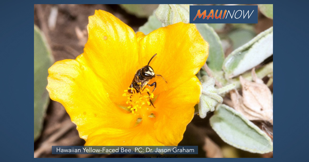 Hawaiian Yellow-faced Bee Presentation, Feb. 16