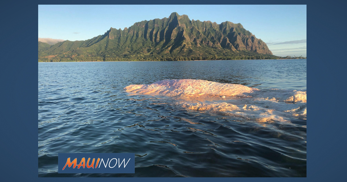 Kaneʻohe Bay Whale Carcass to Stay in Place