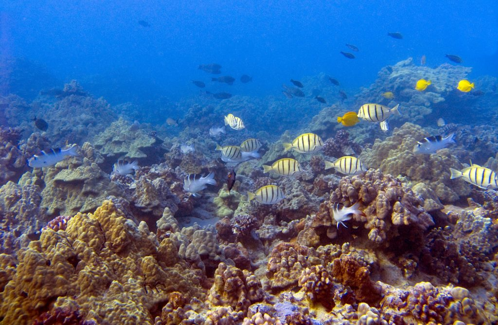 Resilient Reefs on Maui, Threats Identified