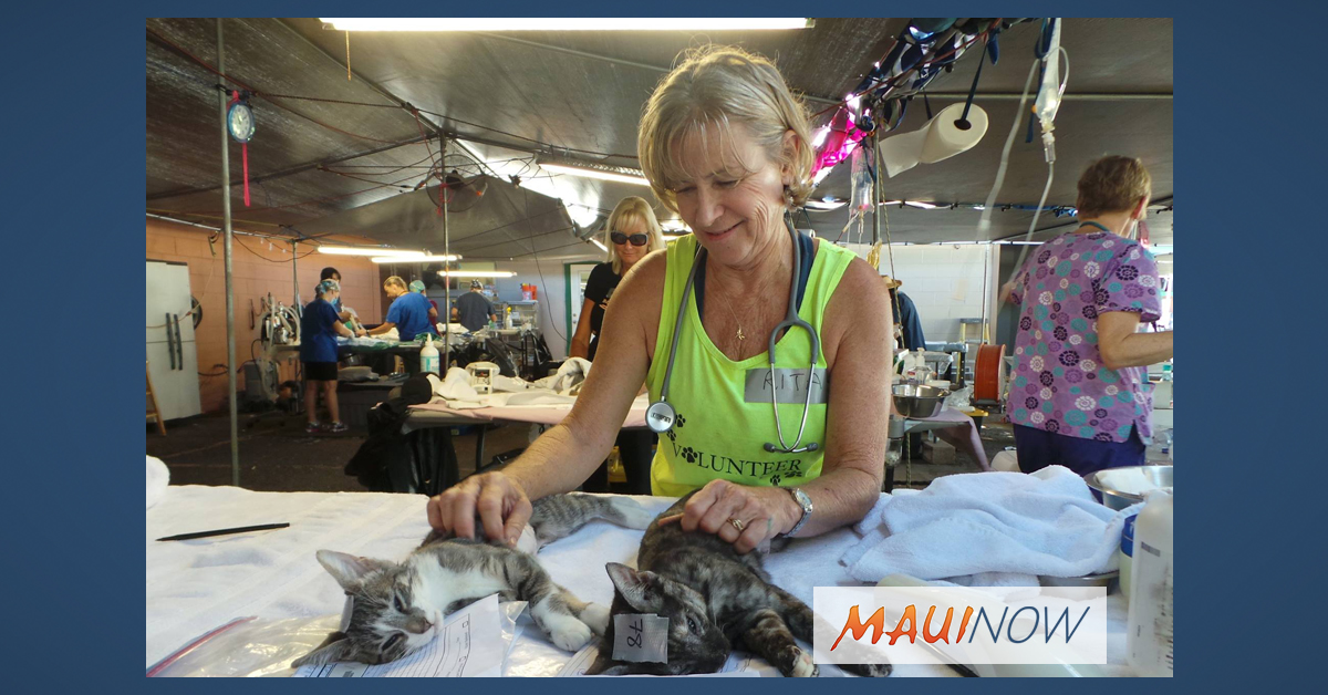 Maui Gets $135K Grant for Spay/Neuter Program