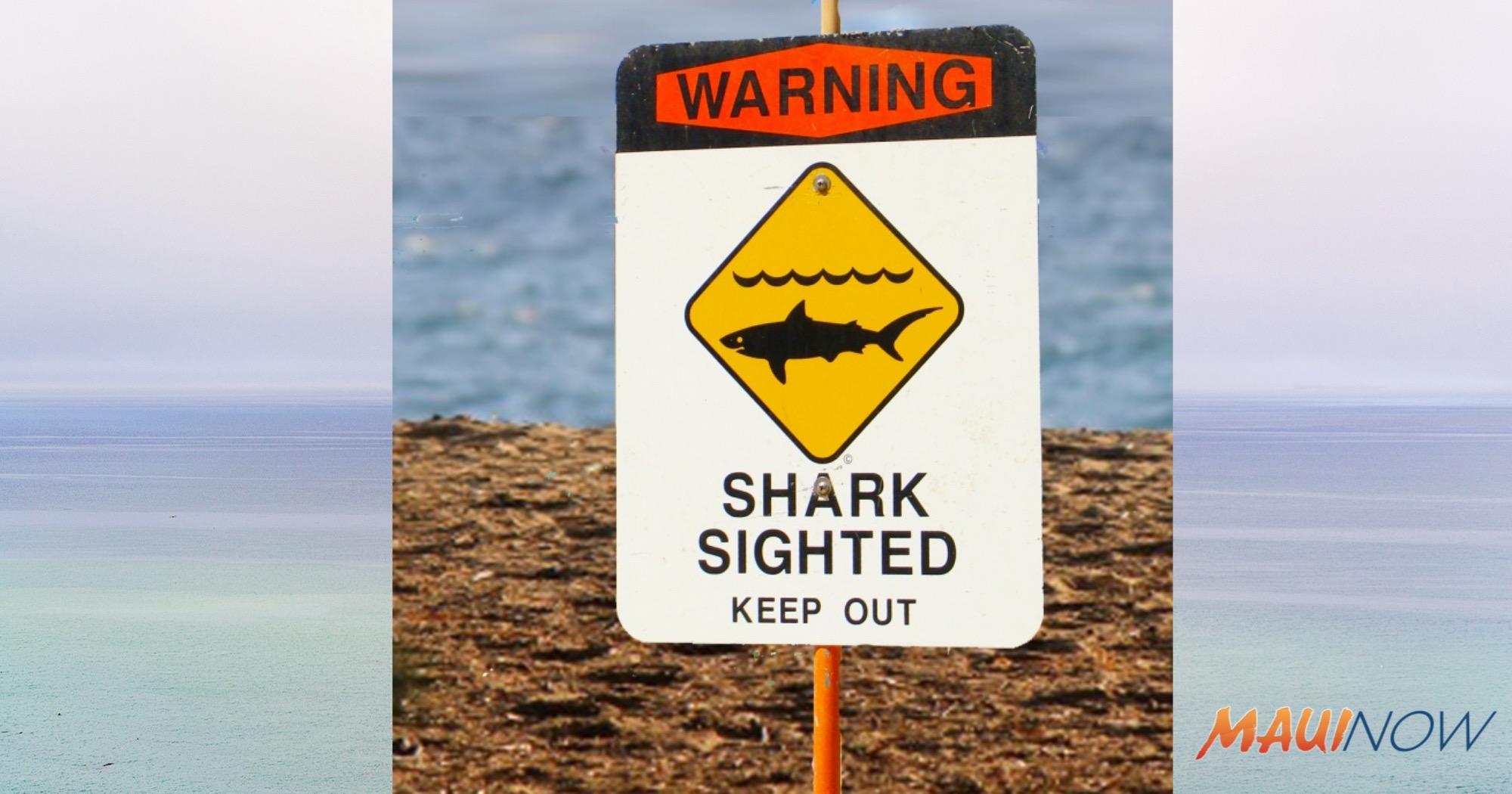 Experts: Shark in Hawaii Island Incident Likely Galapagos