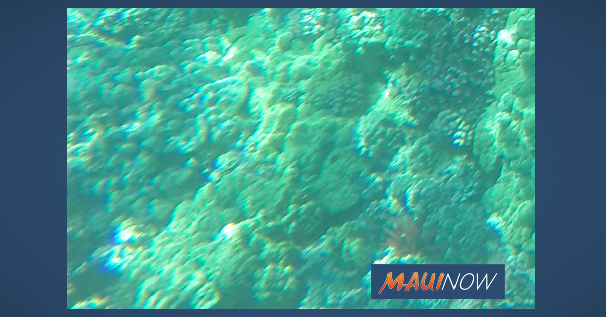 Maui Water Quality Group Settles Injection Well Litigation with County
