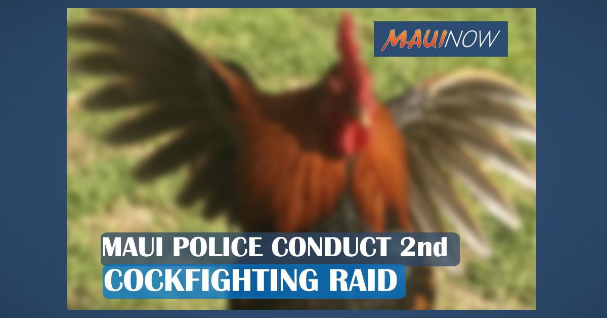 Maui Police Conduct 2nd Cockfighting Raid in As Many Weeks