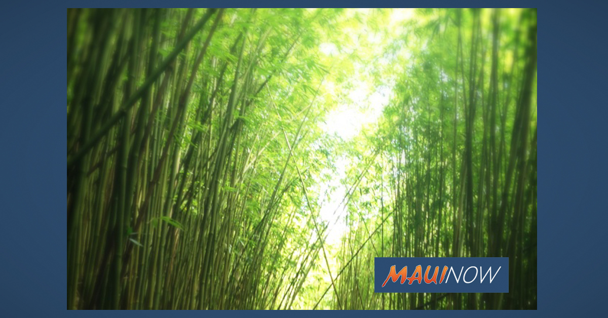 Child Injured at Bamboo Forest in Kailua