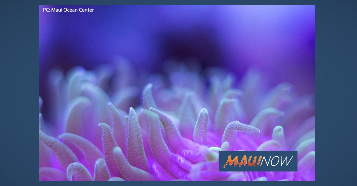 """Incredible Corals: Night at the Reef"" July 3, 2019"