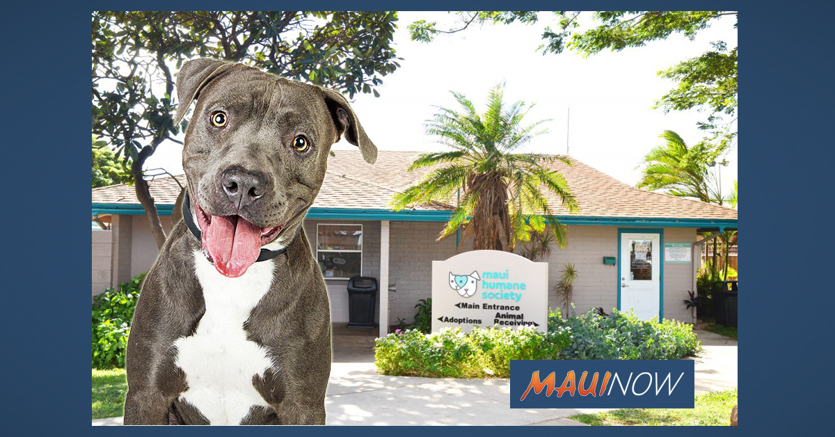 Maui Free Spay and Neuter Clinic for Dogs