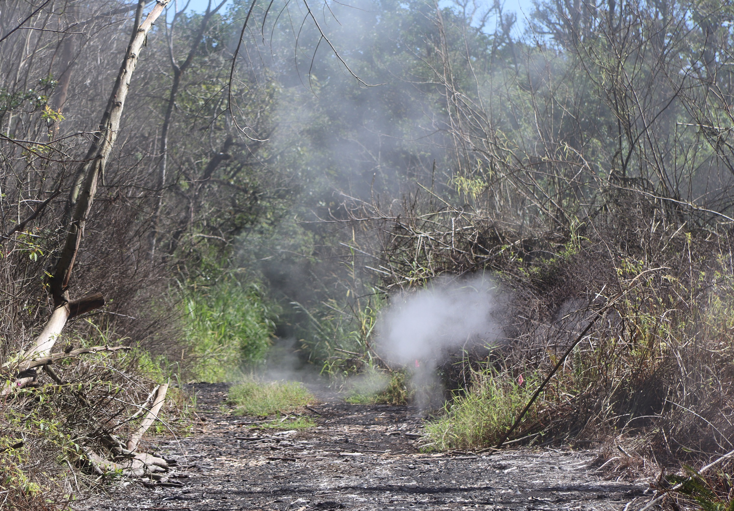 Heat and Gases Linger on Kīlauea Volcano's Lower East Rift Zone
