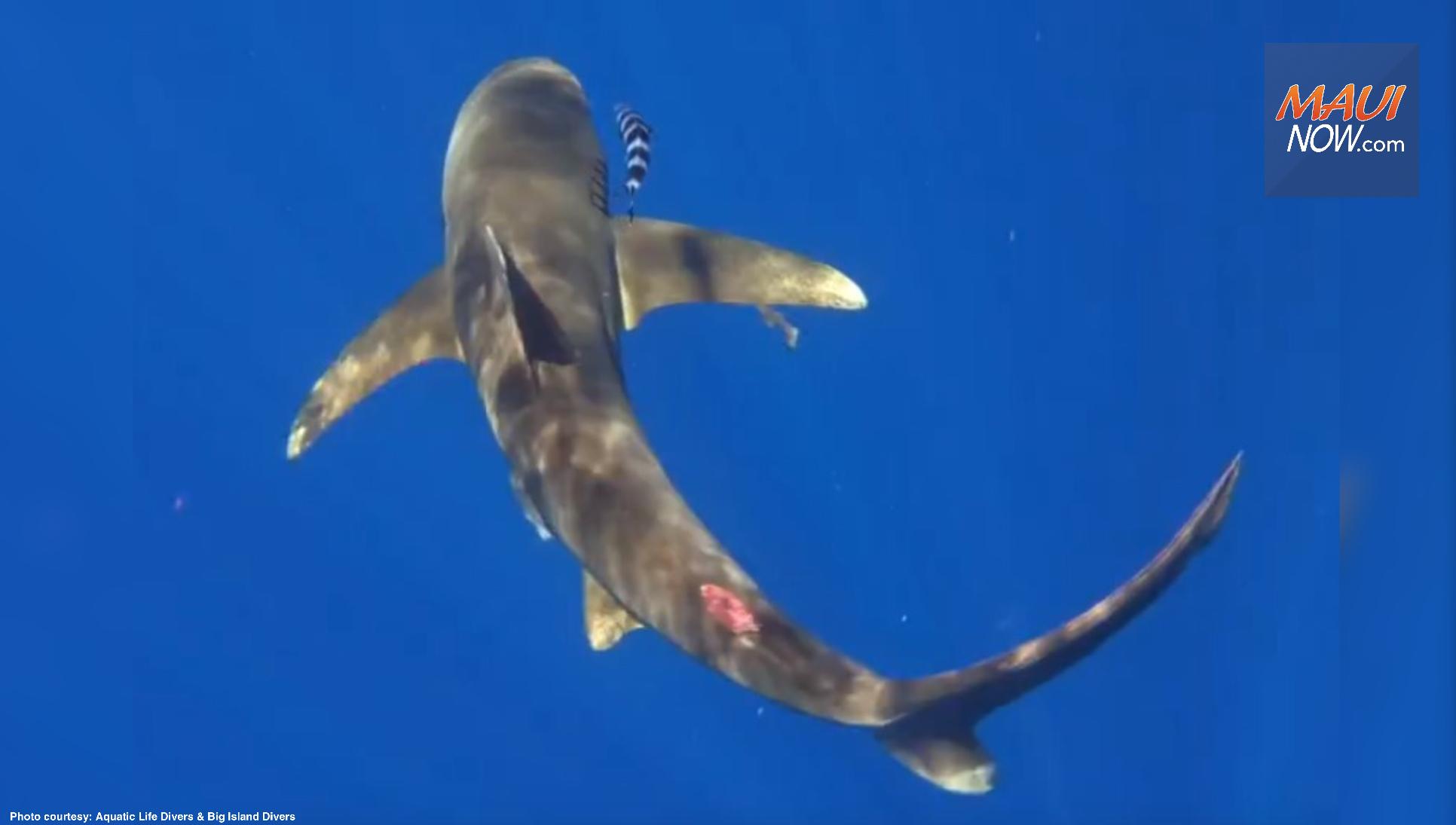 Shark Finning Concerns Raised on Hawai'i Island