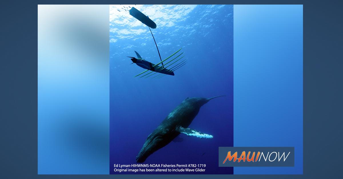 Humpback Whale Calls Heard In Mid-Ocean Basin