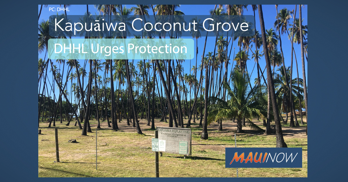 Help Urged in Protection of Kapuāiwa Coconut Grove on Molokaʻi
