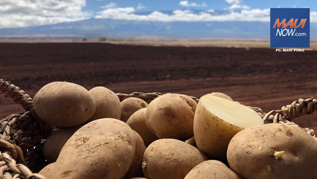 Maui Now: Mahi Pono Potatoes to Debut at Hawai'i Food & Wine Festival on Maui