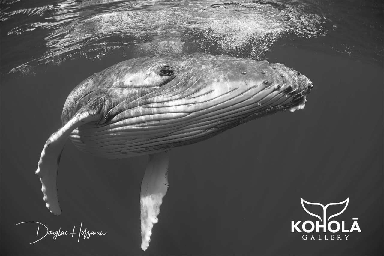 Koholā Gallery Opens at Wailea Village