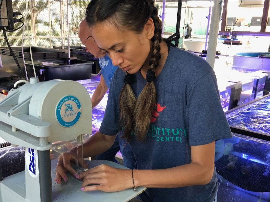 Application Deadline for Marine Science Internship Approaching