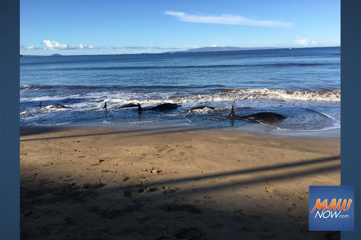 Update: Stranded Whales Suffered From Lung Abnormalities