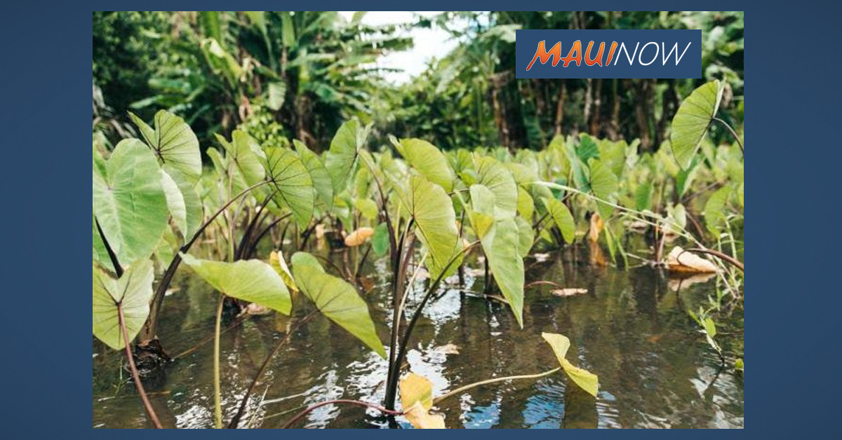 Visitor Industry Customer Service and Tour Guide Certification Offered on Maui