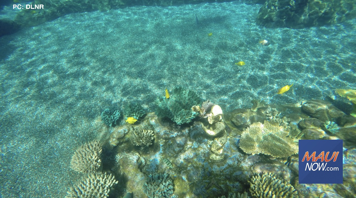 Predicted Coral Bleaching Already Appearing off Molokini and South Maui