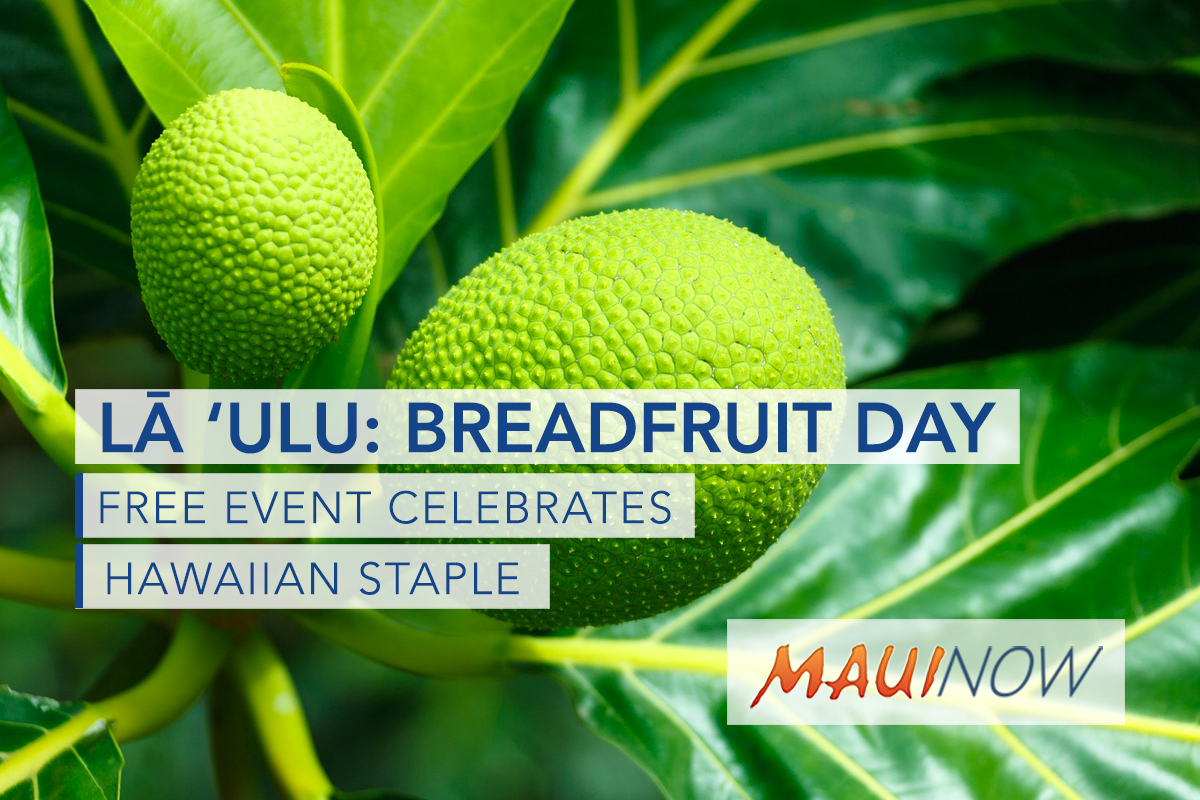 Lā ʻUlu: Breadfruit Day is This Saturday!