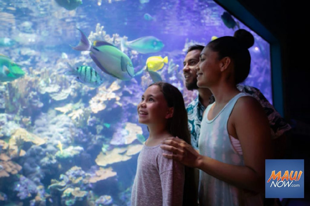 "Maui Now: ""Wai.Kai Week"" Highlights Hawaiian Culture, Conservation"
