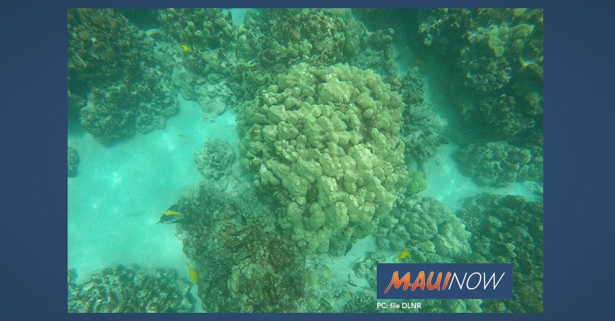 Bill To Restore And Conserve Hawai'i's Coral Reefs Passes Key Committee
