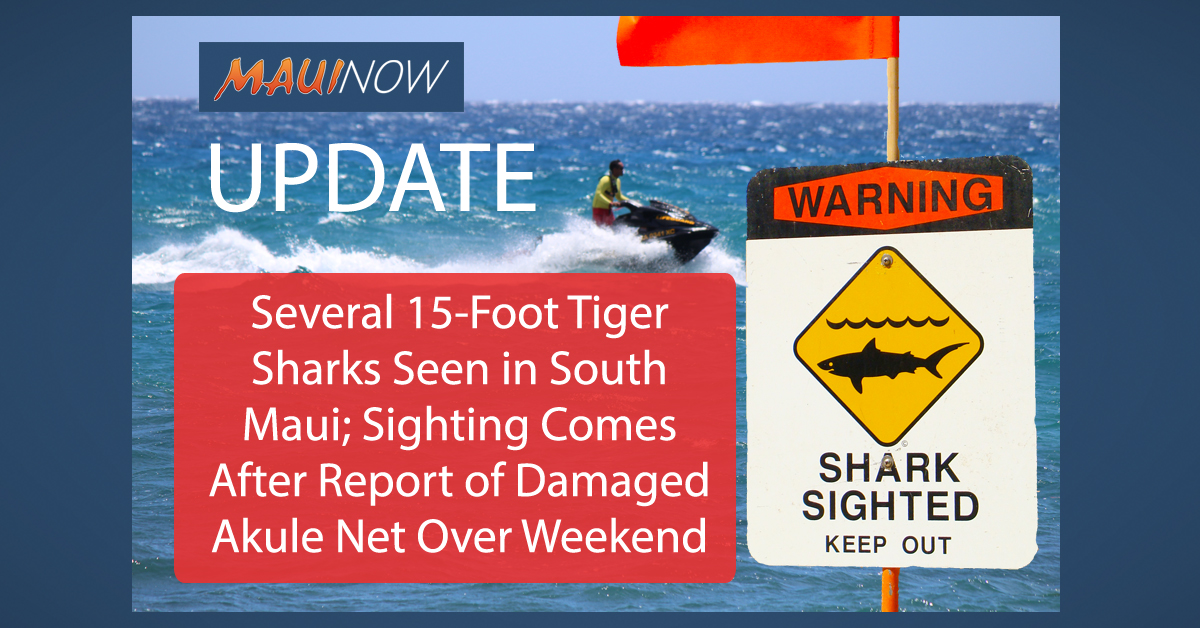 Several 15-Foot Tiger Sharks Seen in South Maui; Sighting Comes After Report of Damaged Akule Net
