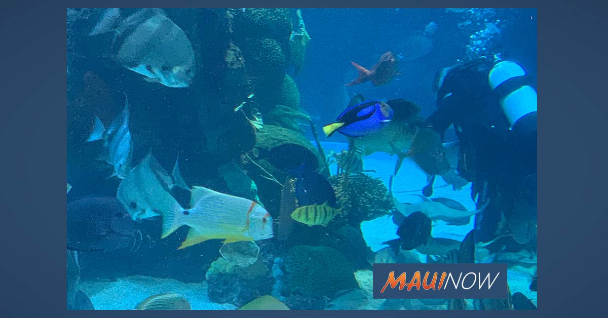 "Environmental Groups Call Aquarium Industry Assessment ""Flawed"""