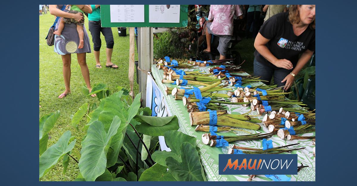 East Maui Taro Festival Awarded OHA 'Ahahui Grant