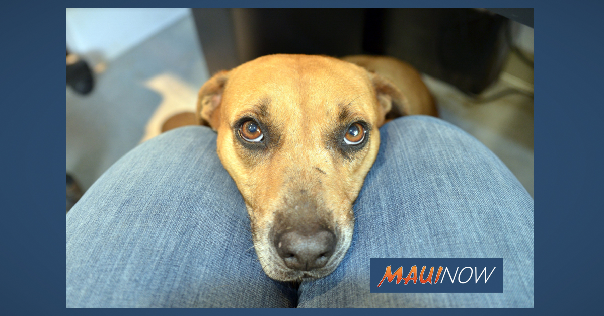 Maui Humane Society Hopes to Clear the Shelter Aug. 23-29