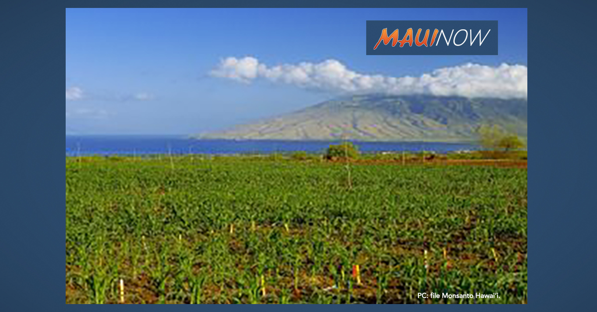 BREAKING: Monsanto to Plead Guilty to Illegally Spraying Banned Pesticide on Maui