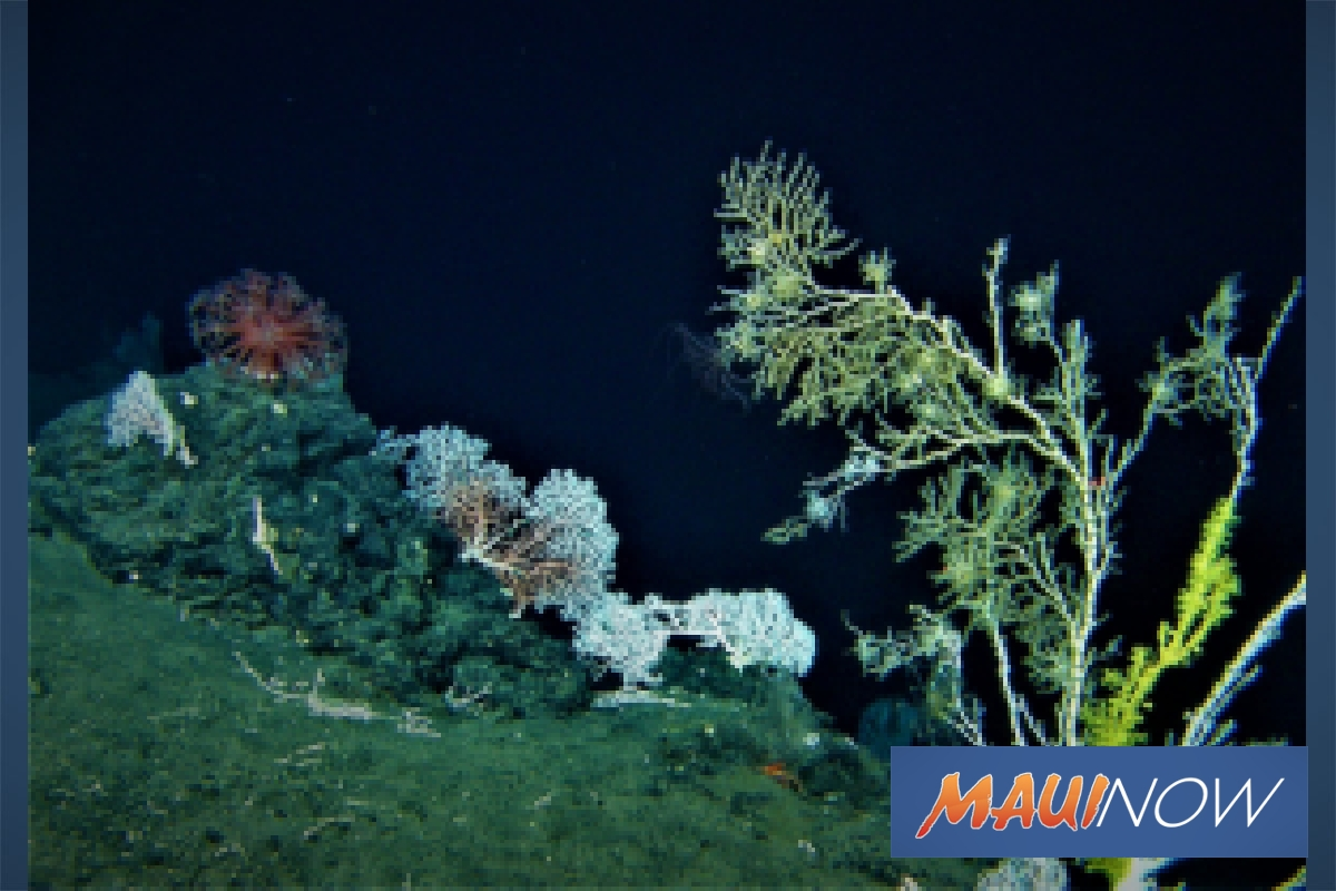 UH Study Reveals Growth Rates of Deep Sea Coral